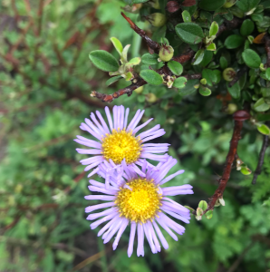 Purple flower on a green background